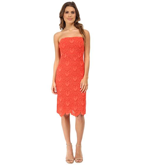 Velvet by Graham & Spencer - Pat Lace Dress (Coral) Women