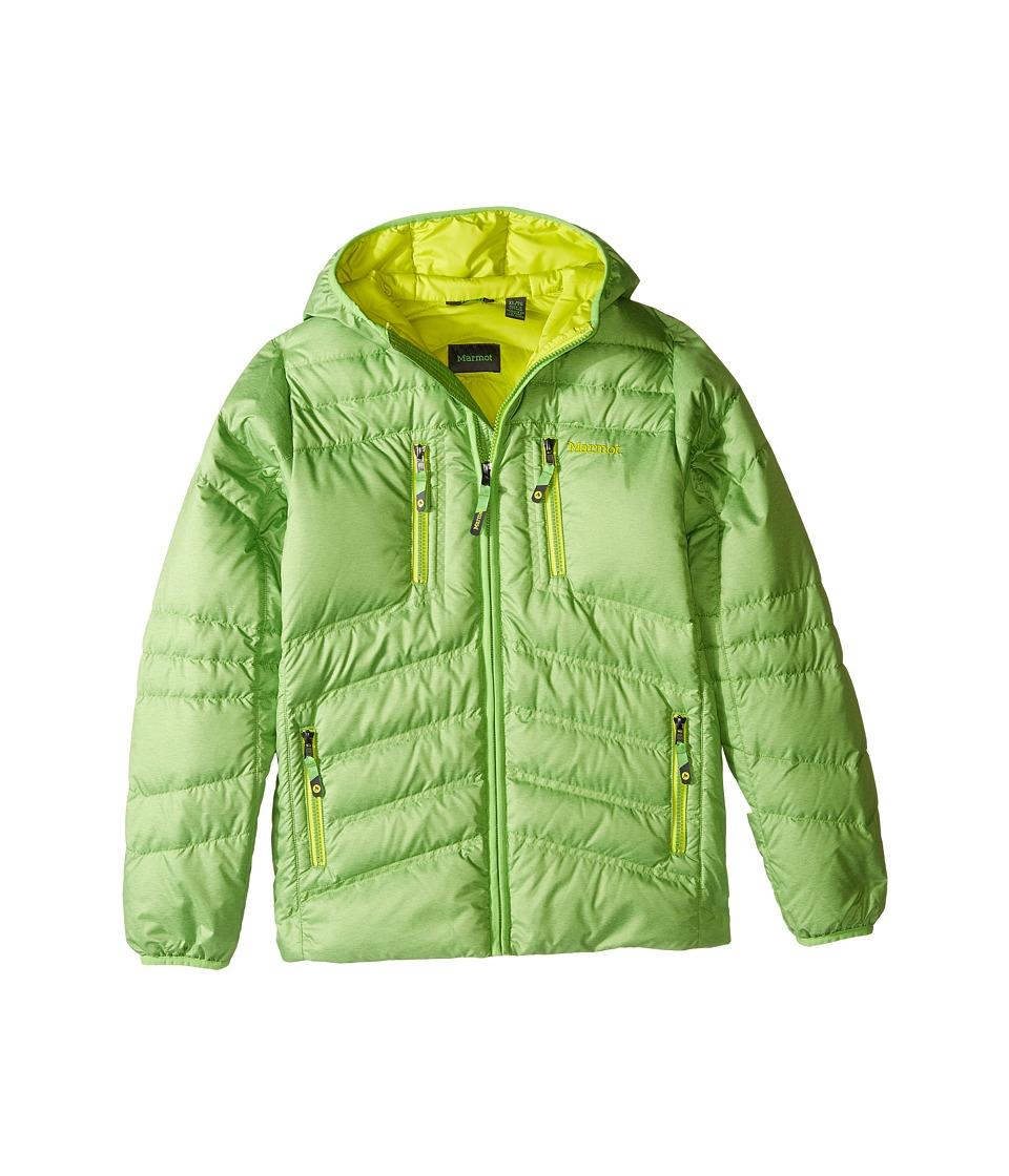 Marmot Kids - Hangtime Down Hoodie (Little Kids/Big Kids) (Vibrant Green) Boy's Sweatshirt