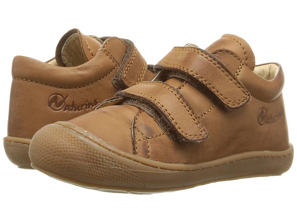 Naturino - Nat. 3972 VL AW16 (Toddler) (Brown) Boys Shoes