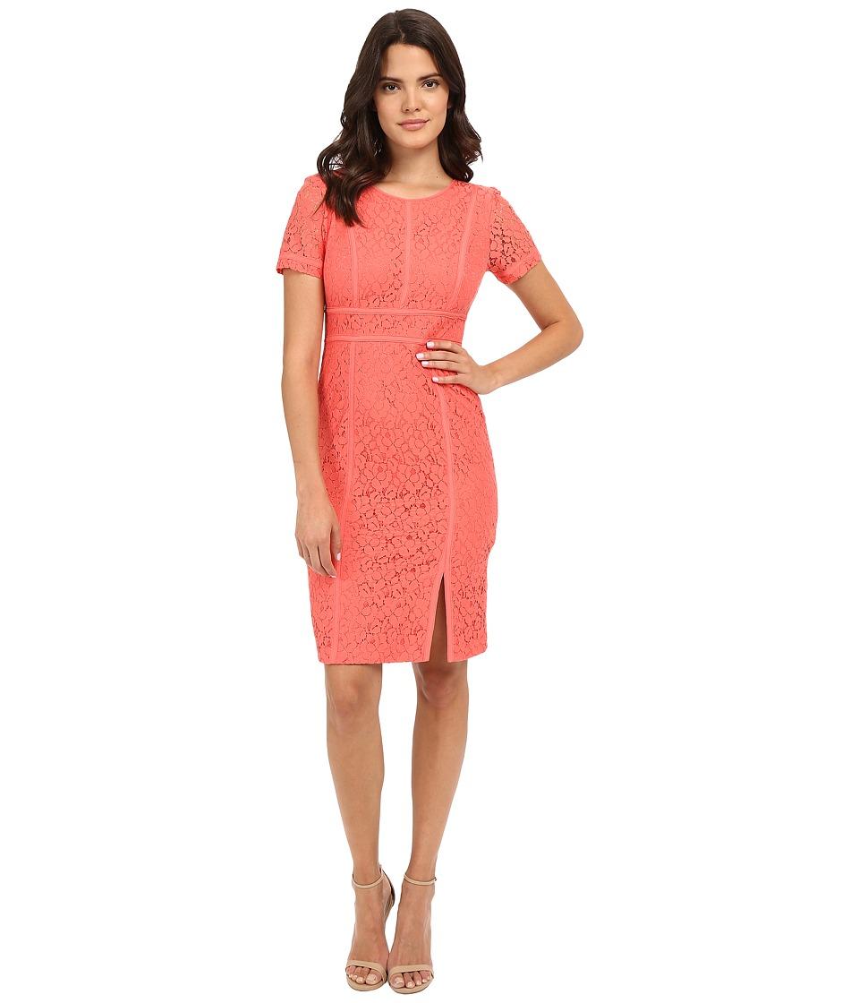 Calvin Klein Floral Lace Cap Sleeve Sheath Dress (Porcelain Rose) Women