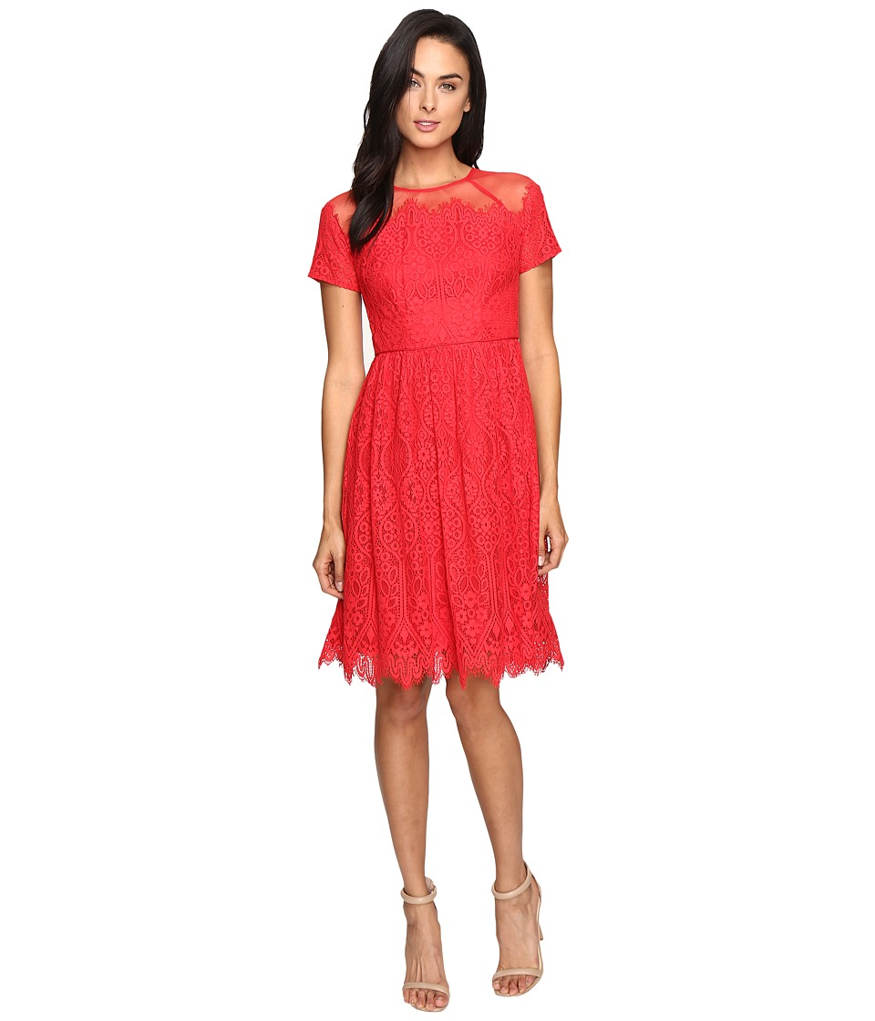 Maggy London Bavarian Leaf Lace Fit and Flare Dress (Rose Trellis) Women