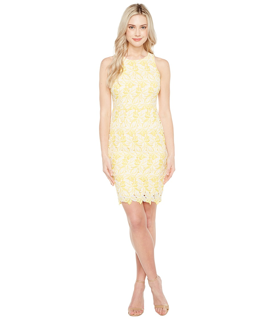 Maggy London Star Flower Lace Scalloped Sheath Dress