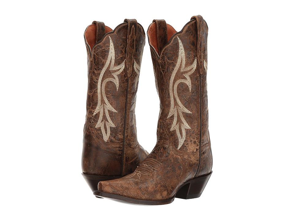 Dan Post Knockout (Brown) Cowboy Boots